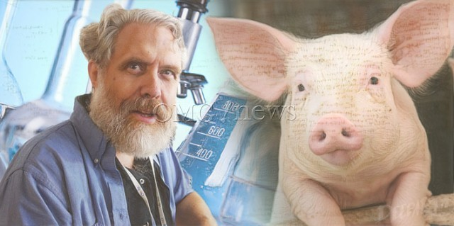 Chimera Human Pig Natural Geogrphic Article