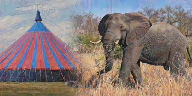 Horror Circus Finally Closing Down - The elephants began to be phased out