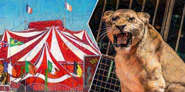 Horror Circus Finally Closing Down - tigers, camels, dogs and horses perform unnatural acts