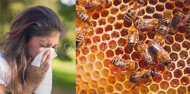 Miracle Healing Powers of Honey - Seasonal Allergies Prevention