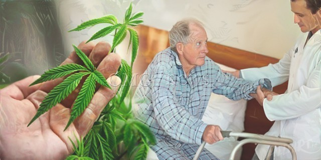 The Scientific Low Down on Pot - Powerful Pain Killer