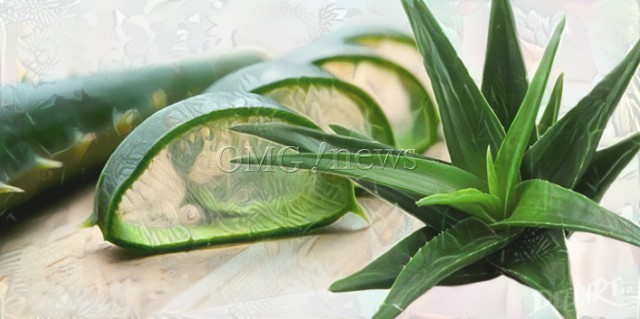 Science Backed Alternative Medicine - Aloe Vera heals Minor Burns