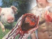 Pig-Human Chimeras to be Exploited for Organ Harvesting