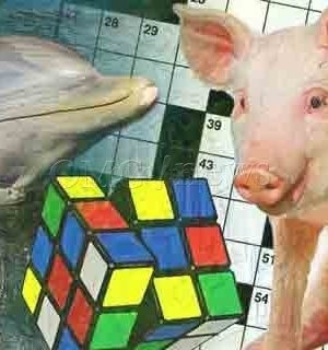 5 Extraordinary Animals with Human-like Intelligence