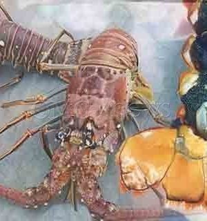 Lobsters Are Doing It, Everybody Wants to Do It
