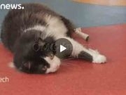 OMG! Cat Gets Bionic Legs in Landmark Operation