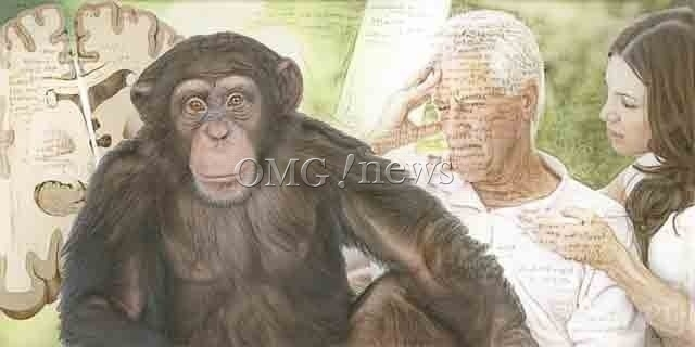 Emerging Chimp Alzheimer's Study Shows Revealing Signs