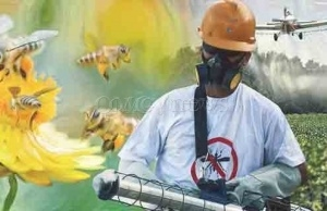 EU Banned Insecticide Threatens Dwindling Bee Populations in the US