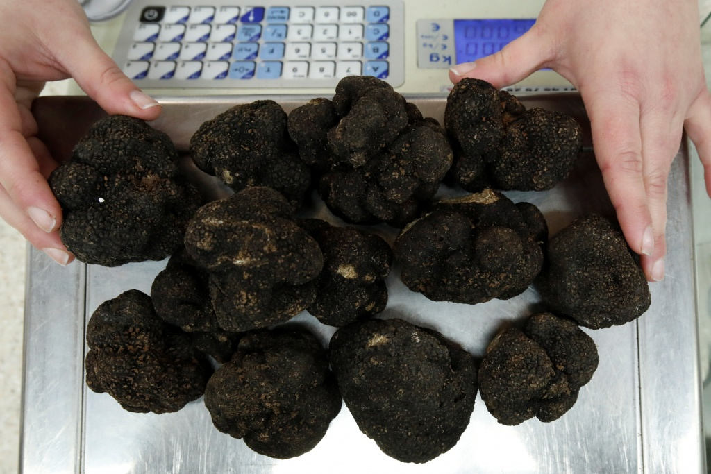 A vendor weighs winter black truffles (Tuber Melanosporum) at the Rungis International wholesale food market as buyers prepare for the Christmas holiday season in Rungis