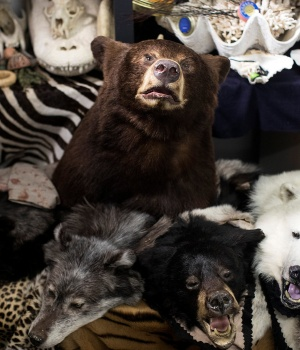 Taxidermy endangered species seized by UK Border Force officers