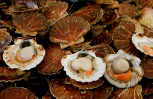 Scallops are seen on a market stall during an annual celebration of scallops in Port-en-Bessin