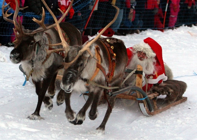 Santas from Sweden and Russia race on their sleighs pulled by reindeers during competition in the Santa Claus Wintergames in northern Swedish town of Gallivare