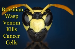 Wasp Venom Cancer Drug Delays Treatment And Cure