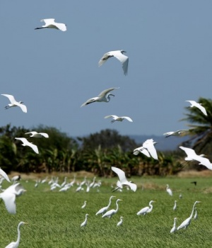 Migratory birds fly in Palo Verde National Park in Bagaces