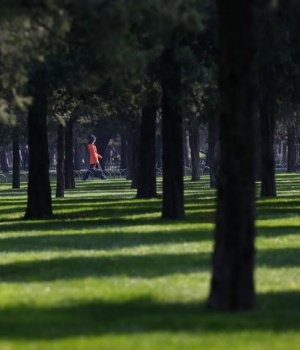 A woman takes a walk at the Temple of Heaven park in Beijing