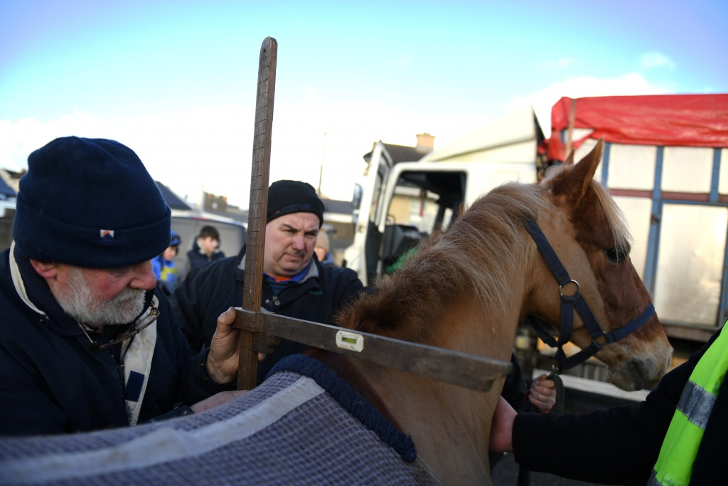A horse is measured to ensure it meets the minimum height requirement for the race, before the Christmas Ballyheigue beach horse races in the County Kerry village of Ballyheigue