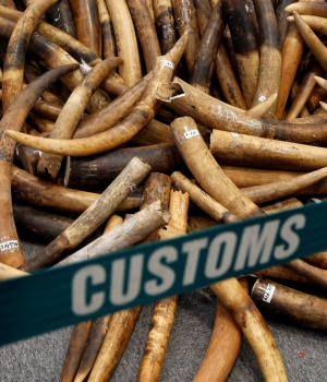 Ivory tusks seized by Hong Kong Customs are displayed at a news conference in Hong Kong