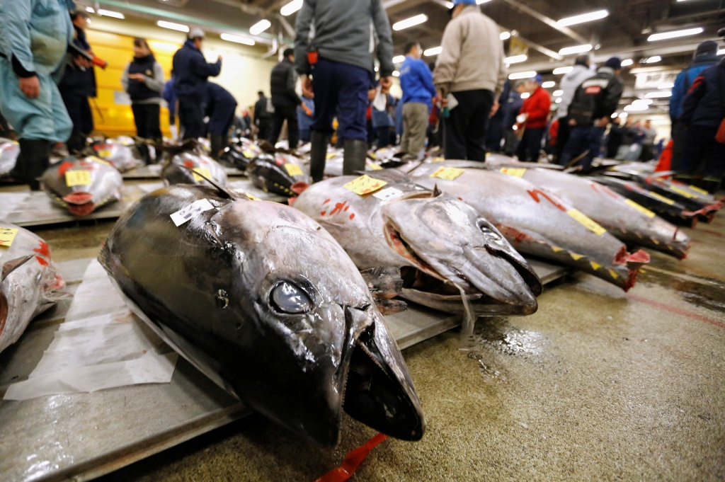 Wholesalers check the quality of fresh tuna displayed at the Tsukiji fish market before the New Year's auction in Tokyo