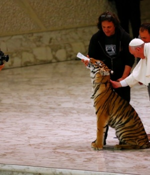 Pope Francis caresses a tiger during a Jubilee audience for the circus performers and street artists in Paul VI Hall at the Vatican