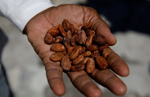 Yoffre Echarri holds cocoa beans on the roof of his house in Caruao