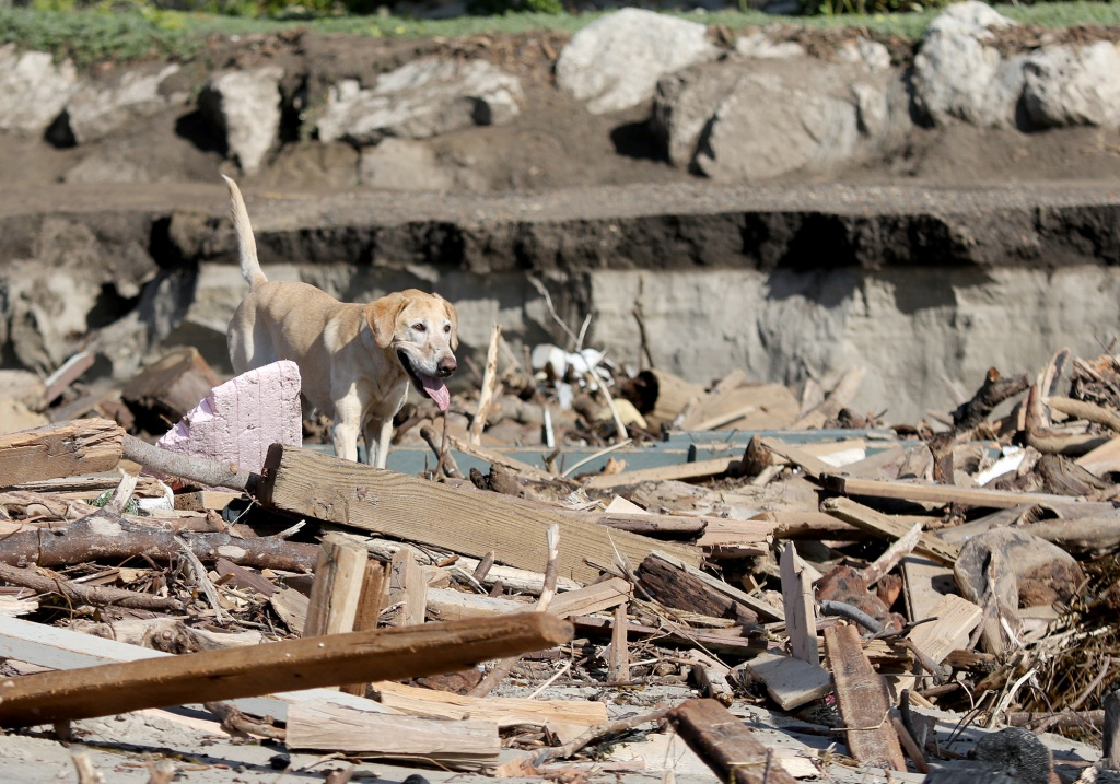 Los Angeles Search and Rescue dog Veya searches for bodies along the beach as officials continue search and rescue efforts after recent mudslides, in Montecito