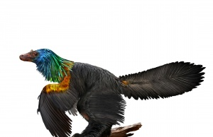 An illustration of a reconstruction of the iridescent dinosaur which had rainbow feathers named Caihong juji unearthed in China
