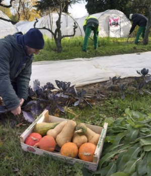 "Members of the ""Jardin du coeur"" association pick vegetables at a garden in Francheville near Lyon"