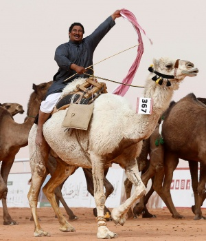 Man cheers as he rides a camel during King Abdulaziz Camel Festival in Rimah Governorate, north-east of Riyadh