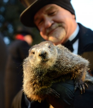 Co-handler Griffiths holds Punxsutawney Phil on Groundhog Day in Punxsutawney