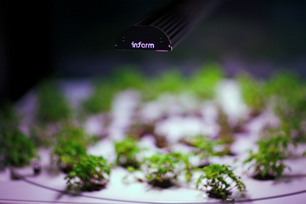 An employee of the urban farming start-up Infarm checks an indoor growing system at the company's showroom in Berlin