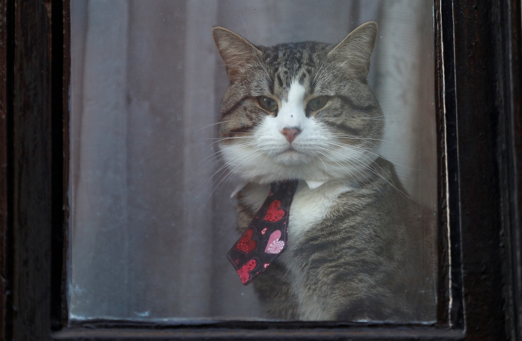Julian Assange's cat sits behind a window at Ecuador's embassy in London