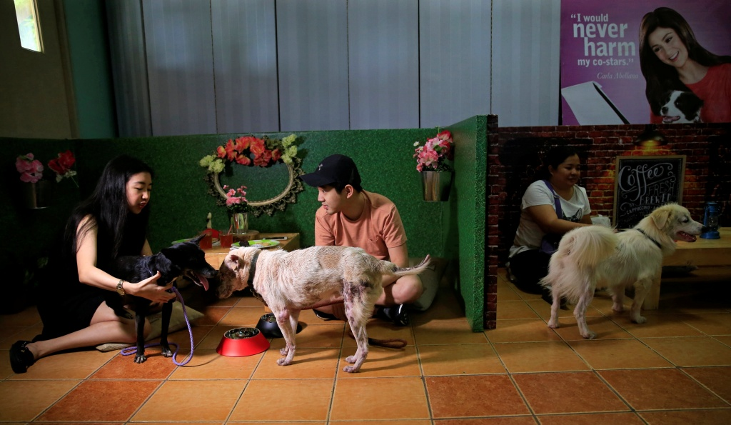 "Pet lovers with shelter dogs are seen during a ""Date with Dogs"", inside the Philippine Animal Welfare Society (PAWS) headquarters in Quezon city, metro Manila"