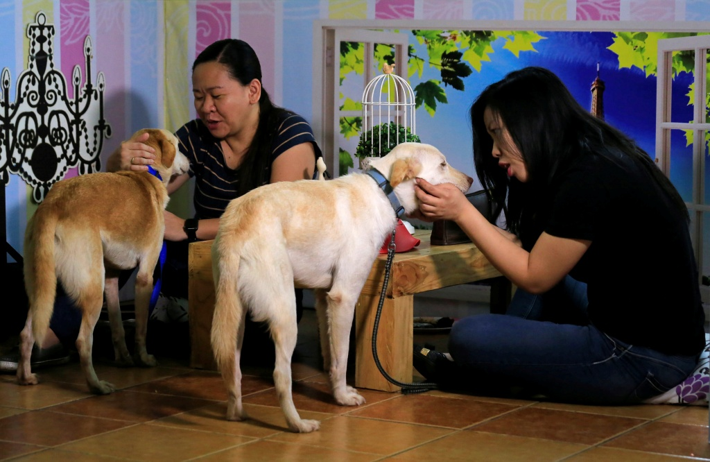 "Pet lovers with shelter dogs are seen during a ""Date with Dogs"" inside the Philippine Animal Welfare Society (PAWS) headquarters in Quezon city, metro Manila"