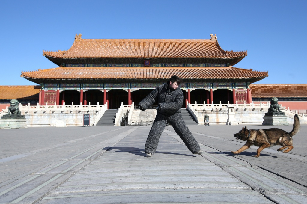 A guard dog attends a daily training session at the Forbidden City in central Beijing