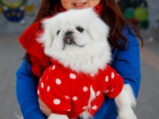 Wang Fei poses for pictures with her Pekingese dog in Beijing