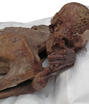 The male mummy known as 'Gebelein Man' can be seen in this photograph issued by The British Museum in London