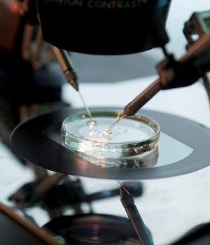 Doctor Katarzyna Koziol injects sperm directly into an egg during IVF procedure called Intracytoplasmic Sperm Injection at Novum clinic in Warsaw