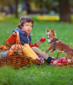 Youngest kids most vulnerable to dog bites