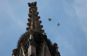 Parrots are seen in a nest on a steeple at the Green-Wood Cemetery in Brooklyn