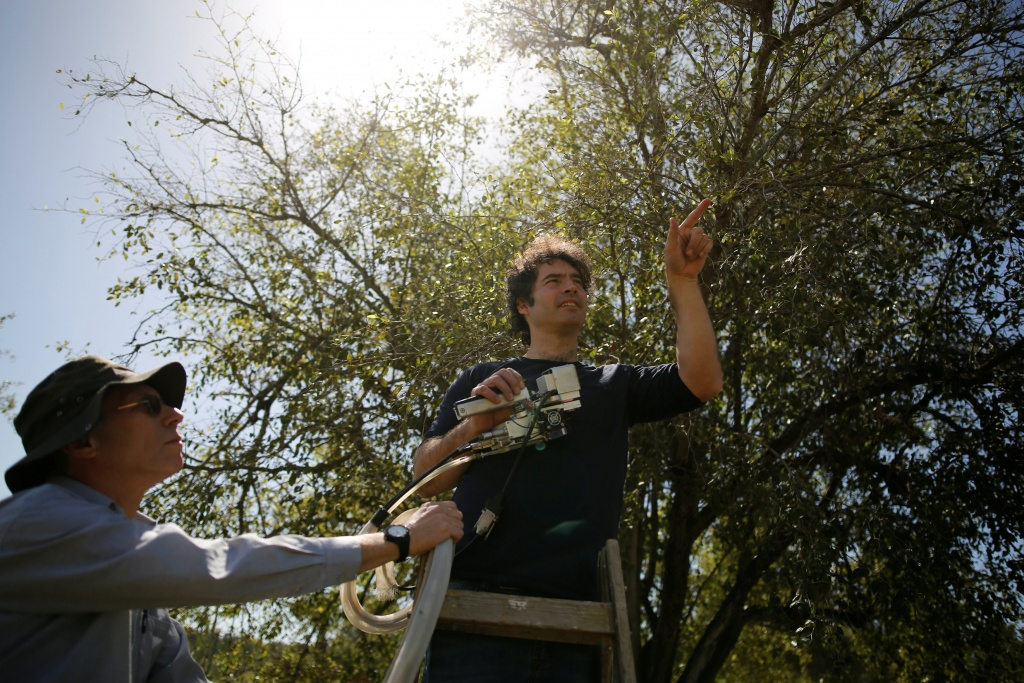 Researchers Yotam Zait and Dr. Shabtai Cohen preform measurements on a Christ's Thorn Jujube tree in Neot Kedumim, Israel