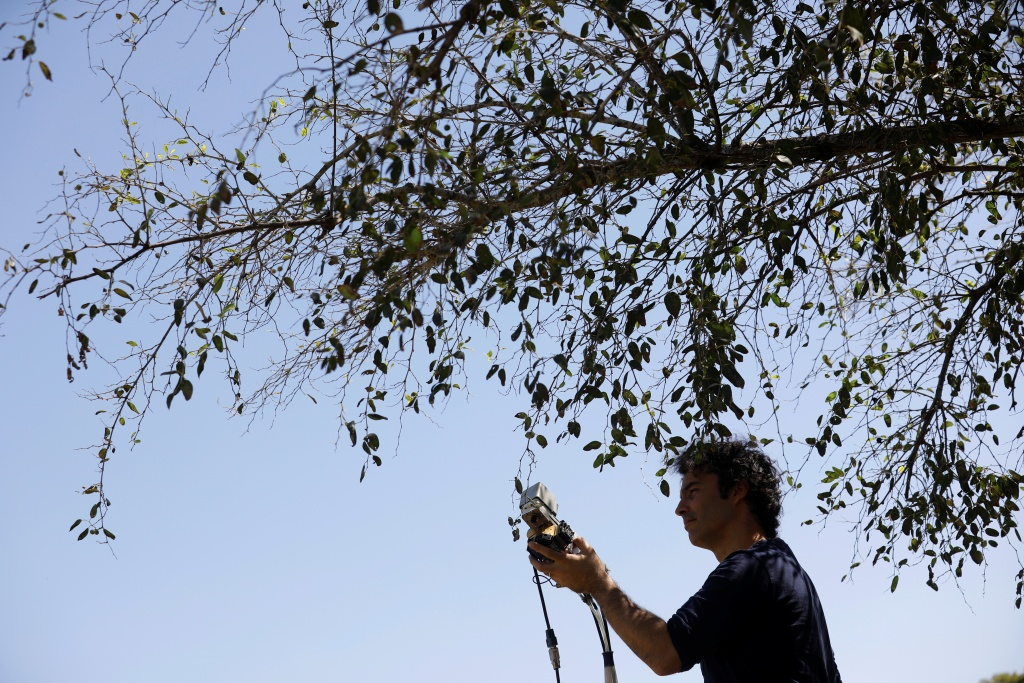 Researcher Yotam Zait preforms measurements on a Christ's Thorn Jujube tree in Neot Kedumim, Israel