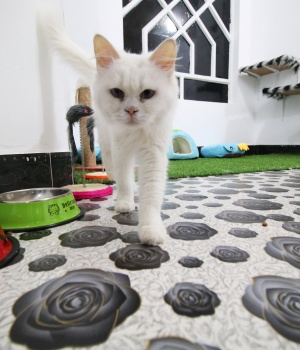 Cats are seen at a room in a cat hotel in Basra
