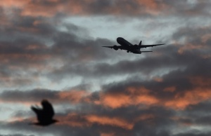 A bird passes in the foreground as a passenger aircraft makes it's final landing approach towards Heathrow Airport at dawn in west London Britain