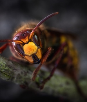 South Korea has a sting in the tail for drinkers who mix wasps and soju