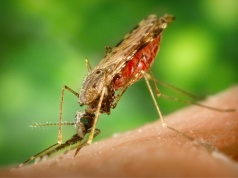 New weapon in malaria fight: a better bed net