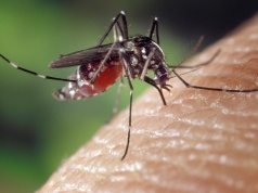 Men's risk of sexually spreading Zika virus dissipates after first month