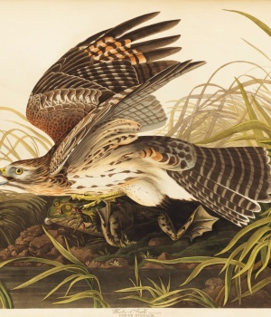 Audubon's The Birds of America, from Original Drawings appears in this photo provided by Christie's