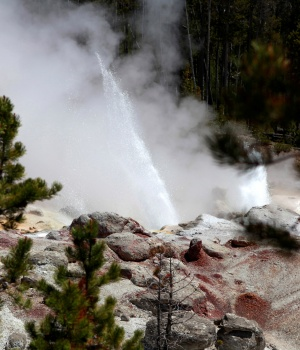 The Steamboat Geyser erupts in Yellowstone National Park, Wyoming