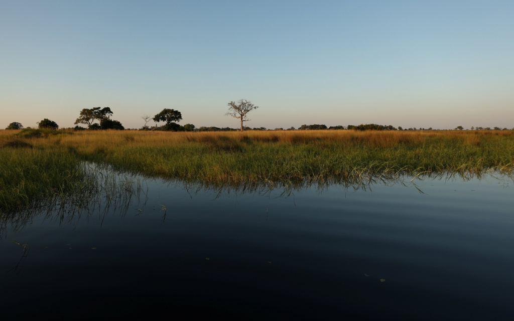 Reeds sit as waters begins to fill the Okavango Delta