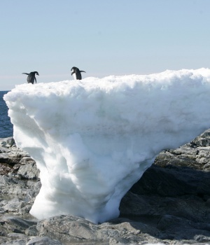 Adelie penguins stand atop a block of melting ice on a rocky shoreline at Cape Denison, Commonwealth Bay, in East Antarctica